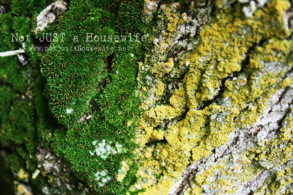 moss tree yellow green edited 2 1024x682 Design Inspiration From Nature