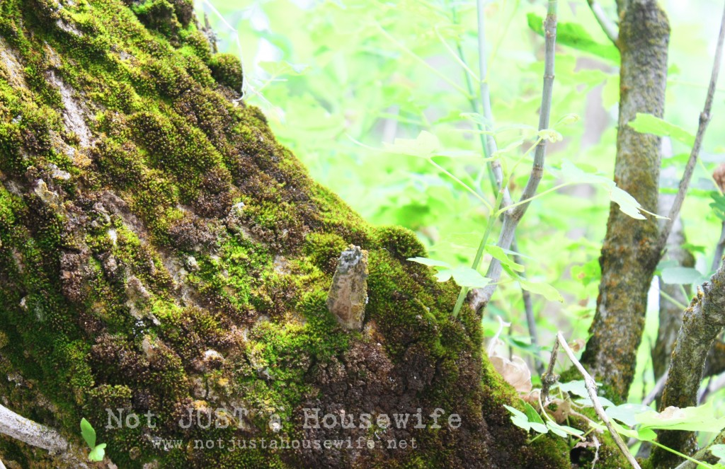 moss tree edited 4 1024x663 Design Inspiration From Nature