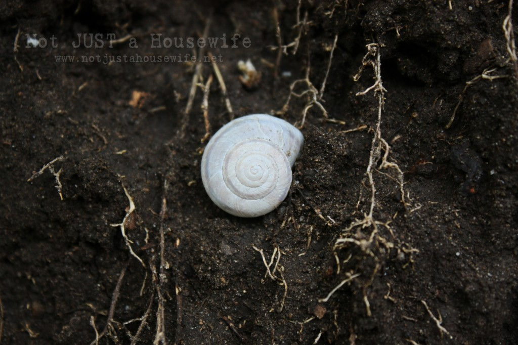 snail shell edited 1 1024x682 Design Inspiration From Nature