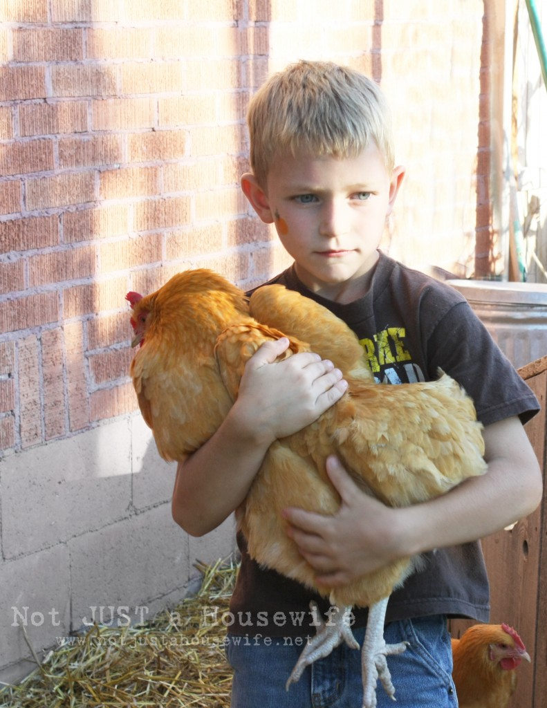 boy chicken 791x1024 County Fair Birthday Party