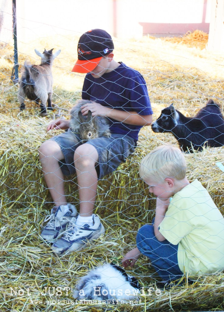 petting zoo 736x1024 County Fair Birthday Party