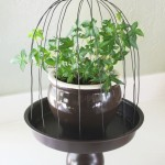 Wire Plant Cloche Tutorial