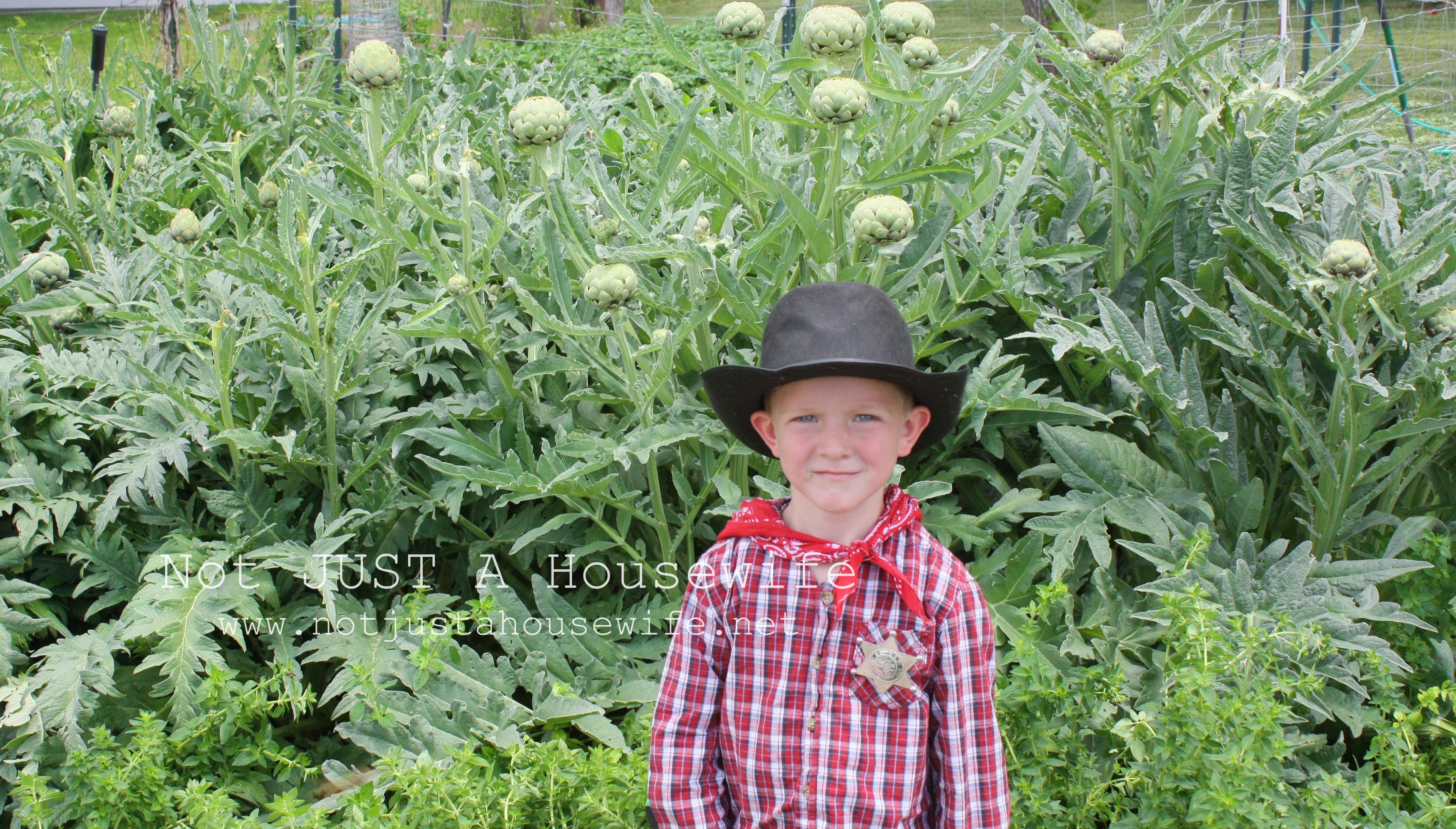 how to choose an artichoke