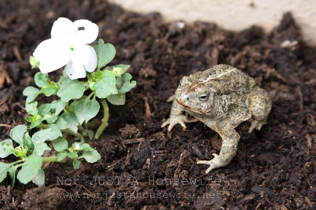 secret garden frog 1024x682 Welcome to my secret garden....