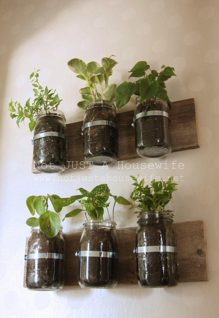 mason jar planter 707x1024 Mason Jar Planter: UPDATE