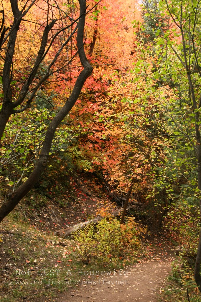 canyon autumn 682x1024 I Love Fall!