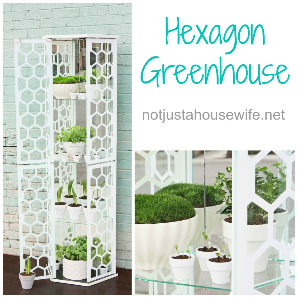 open hexgon greenhouse2 1024x1024 Hexagon Greenhouse