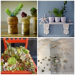 indoorplantdecor
