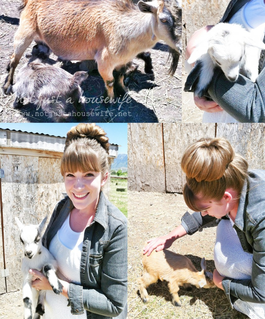 pygmy goats 853x1024 Show Me What Ya Got #123