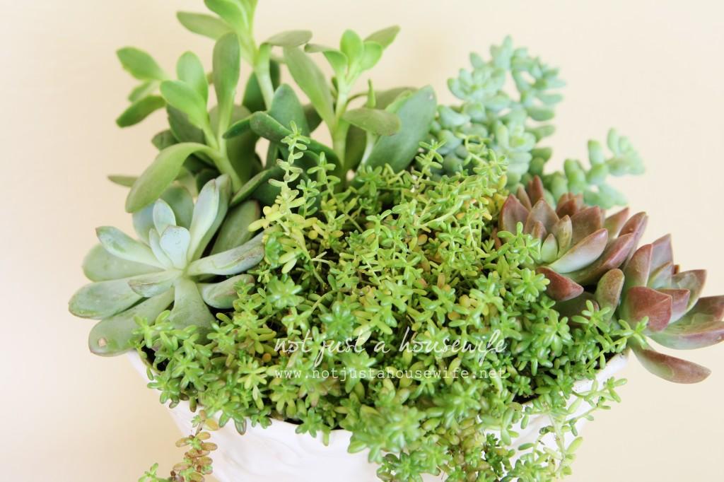 succulants 1024x682 Succulent Planter