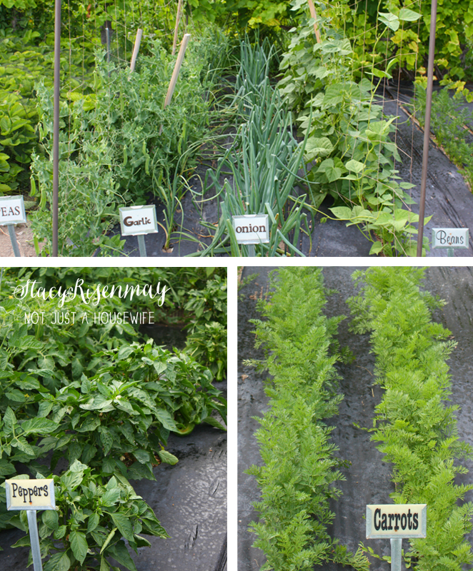 How To Control Weeds In Your Garden Stacy Risenmay