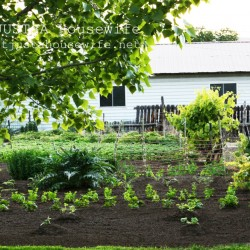garden, tilled to controll weeds