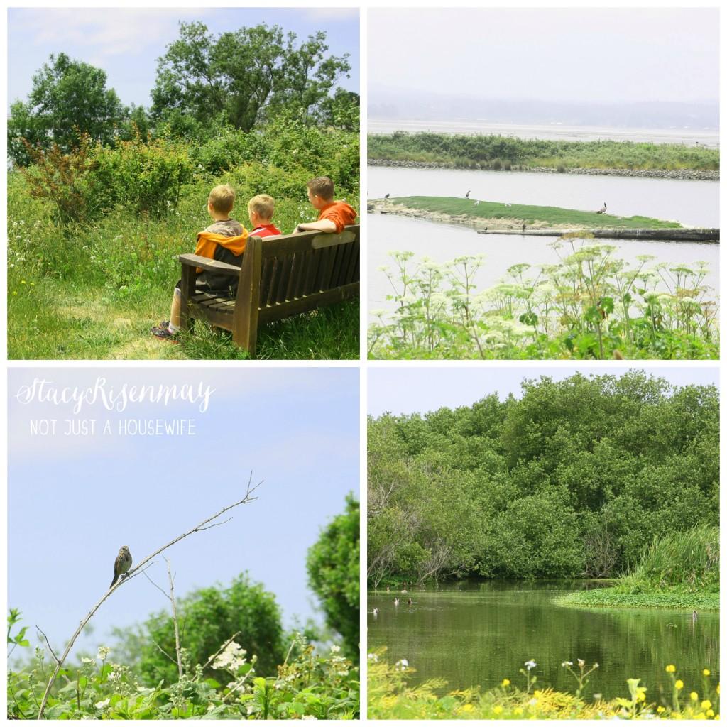 Arcata Marsh and Wildlife Preserve 1