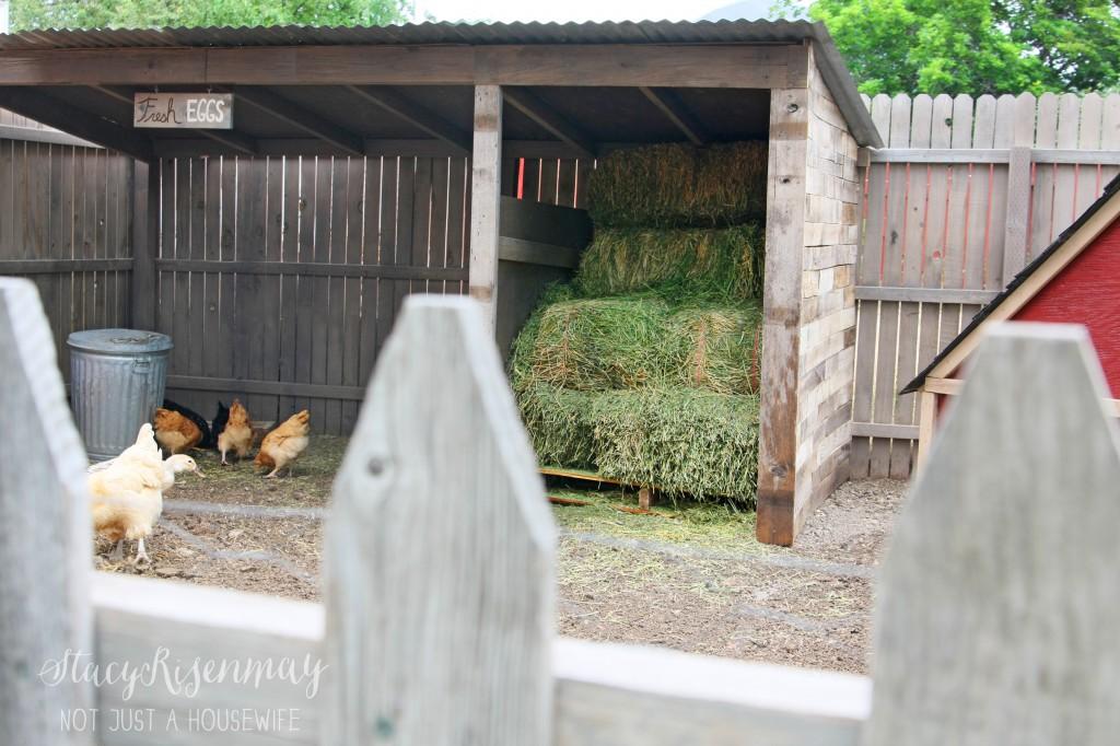 chicken coop1