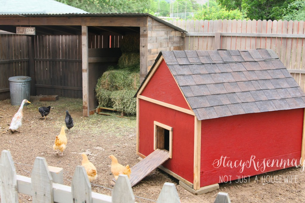 chicken coop and pen with chickens and ducks