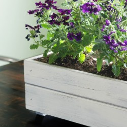 featured image planter