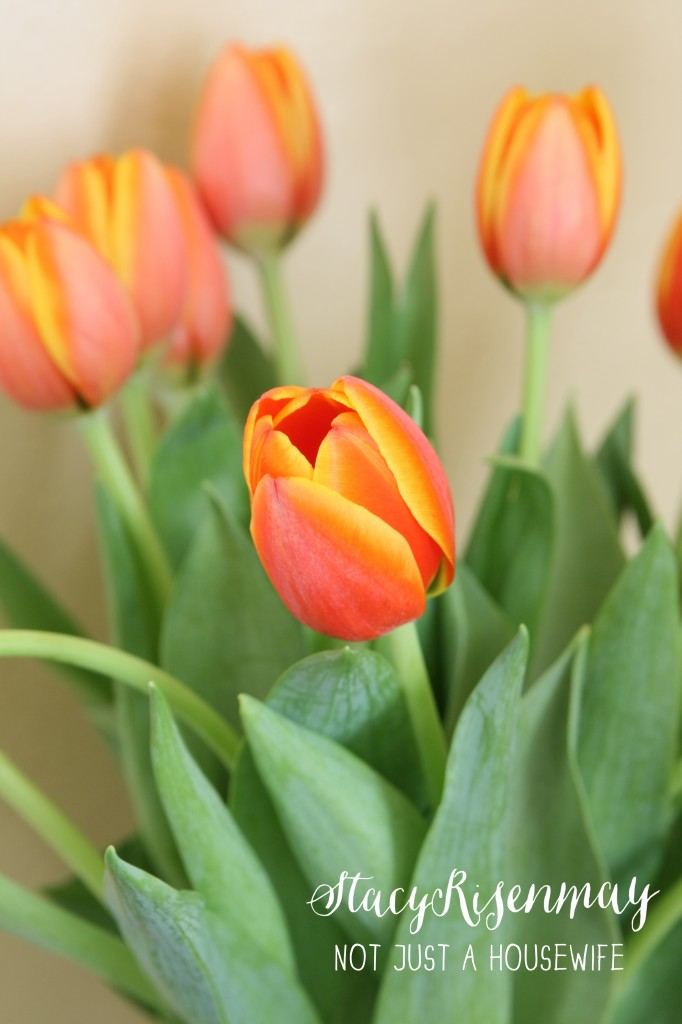 tulips 682x1024 How To Decorate With Plants