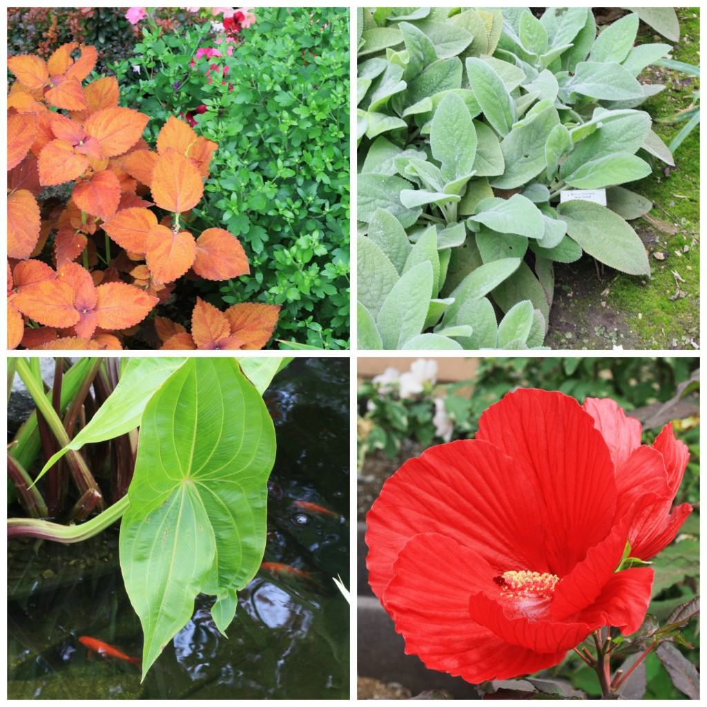 plants in the BHG test garden
