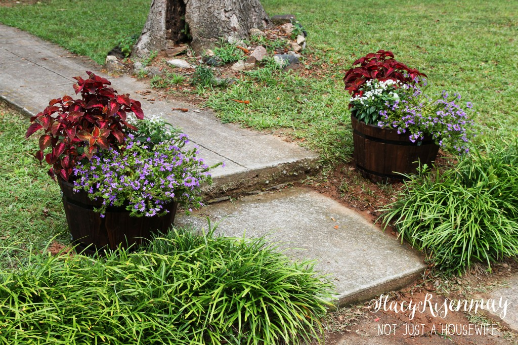 new planters_edited-1