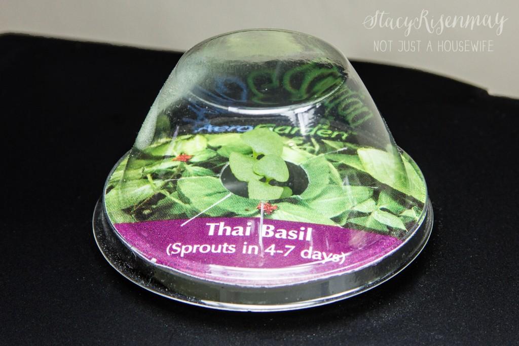 basil growing in aerogarden