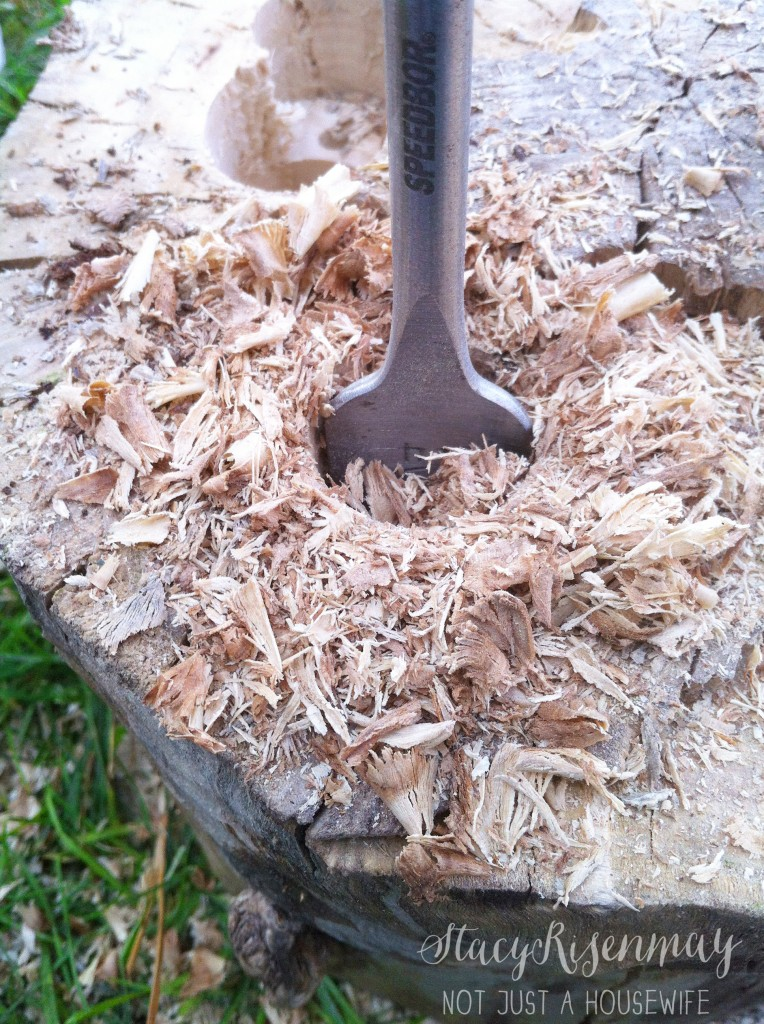 boring through tree stump