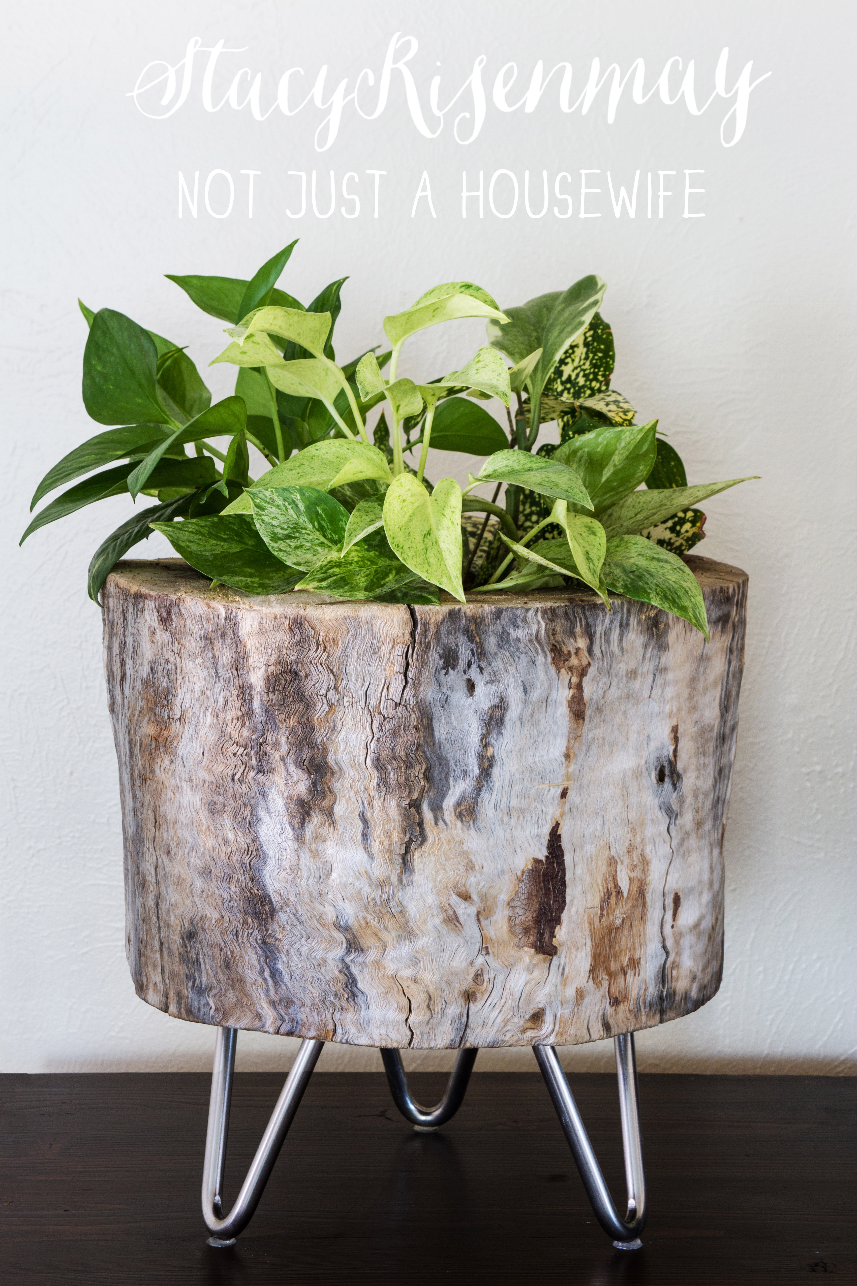 Modern tree stump planter not just a housewife for What to make with tree logs