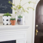 Hanging Air Plant {Styled X3}