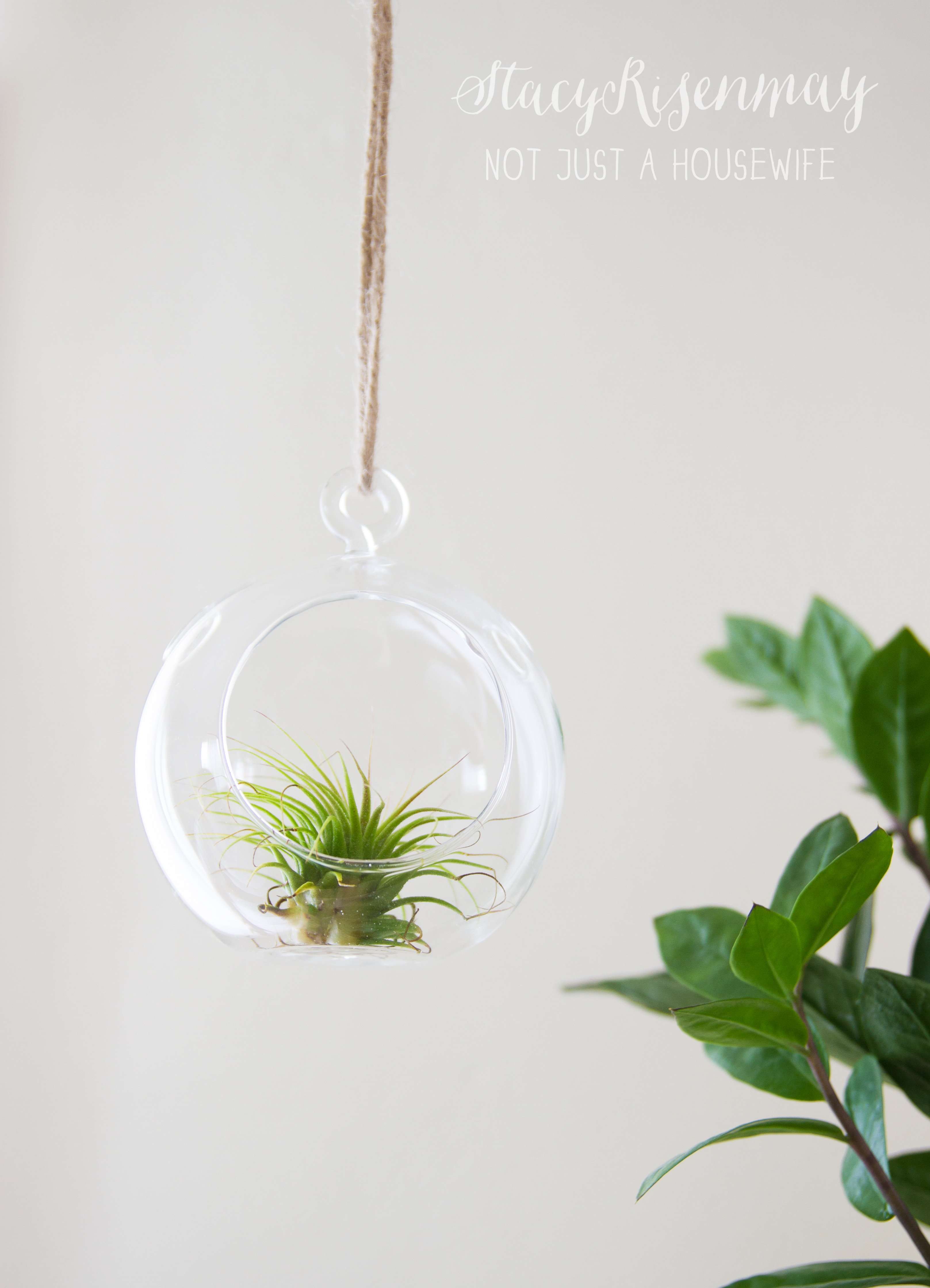 Hanging Air Plant Styled X3 Stacy Risenmay