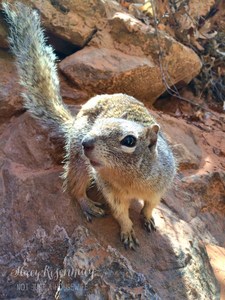 wildlife at Zion National Park