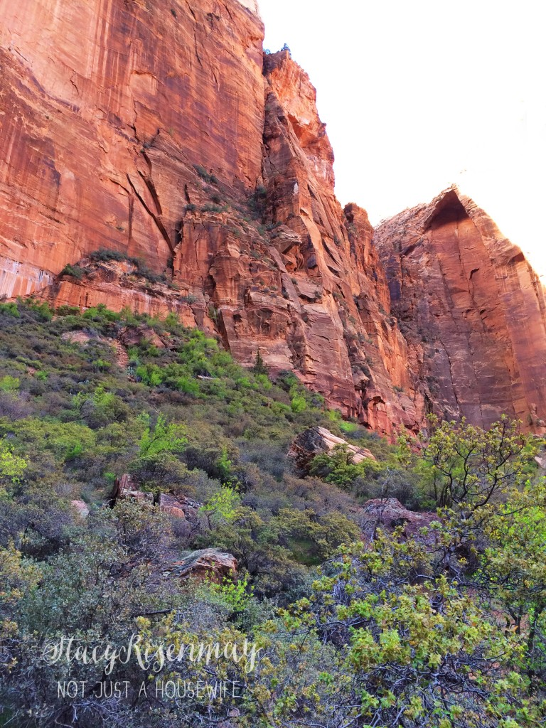 zions national park 1