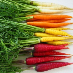 rainbow carrots_edited-2