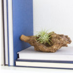 Driftwood Bookend {Styled X3}
