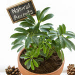 natural accents party featured image