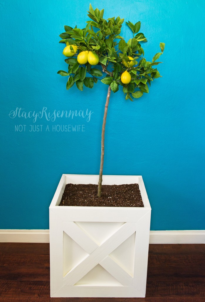 x planter with lemon tree
