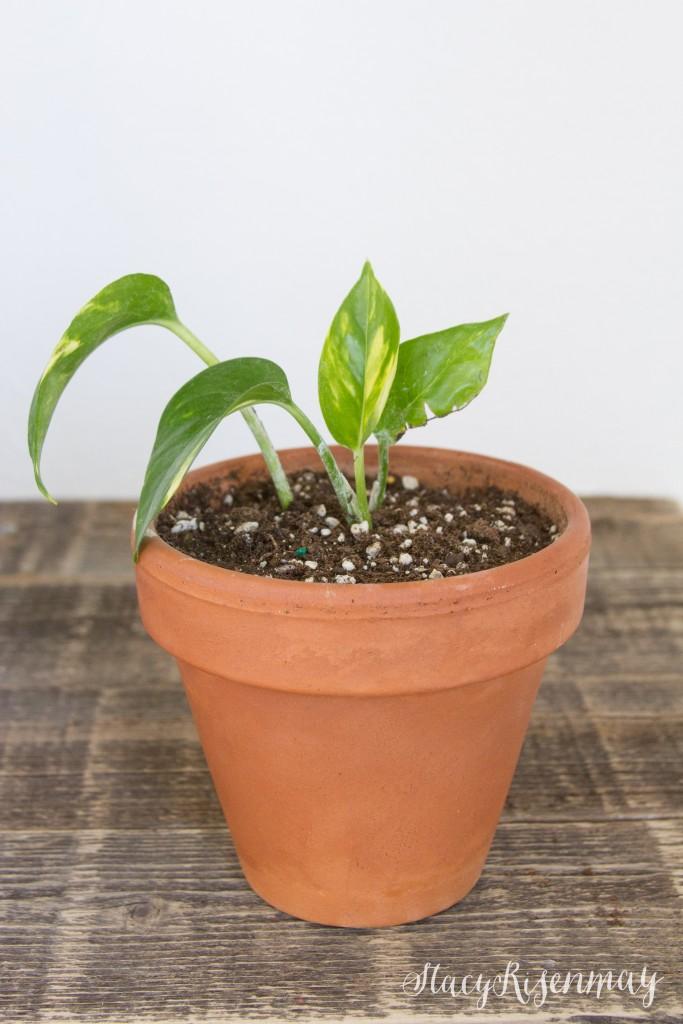 new start for plant