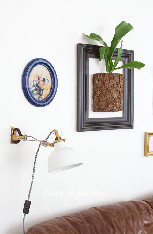 gallery-wall-with-staghorn-fern