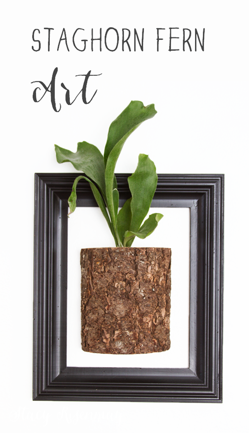 wall planter for staghorn fern
