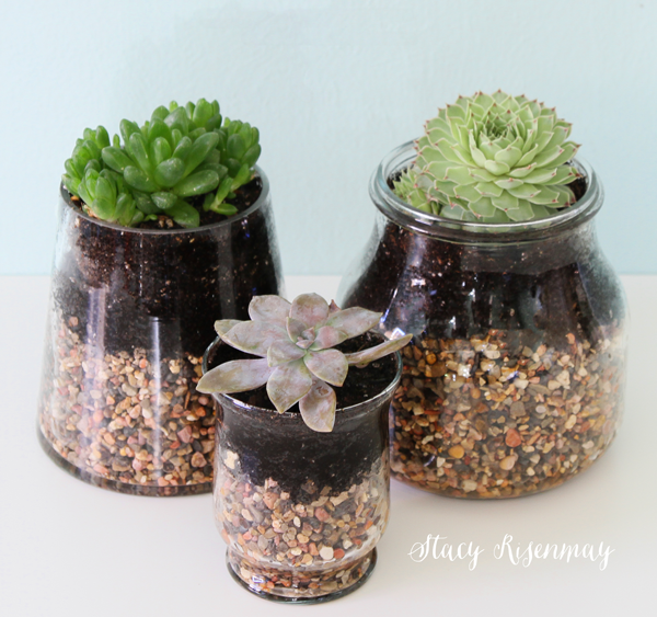 succulents-in-glass-containers
