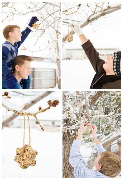 hanging-bird-feeder