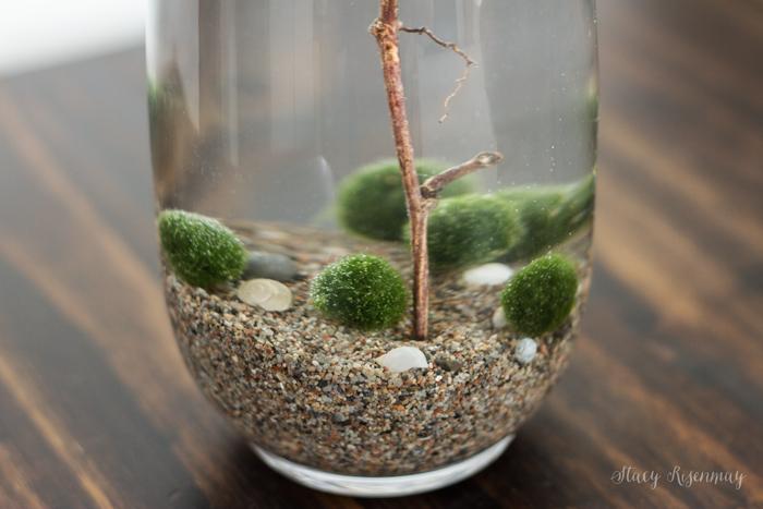 moss-bass-for-terrarium
