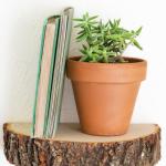 Wood Slice {Styled X3}