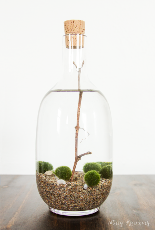 http://www.notjustahousewife.net/2016/02/fun-finds-moss-balls.html