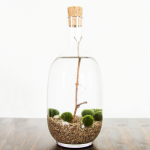 water-terrarium-featured-image