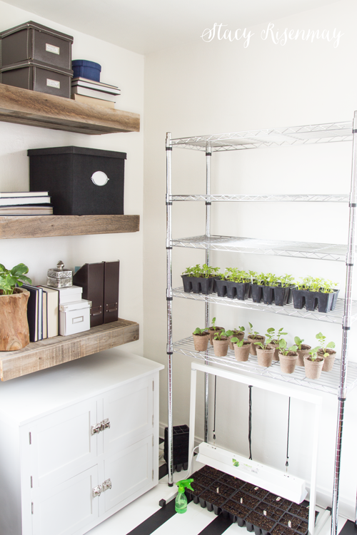 seed-saving-shelf-for-small-spaces