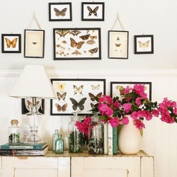 butterfly prints