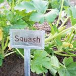 Garden Planning and Crop Rotation