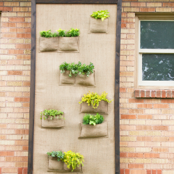 featured-image-plant-wall