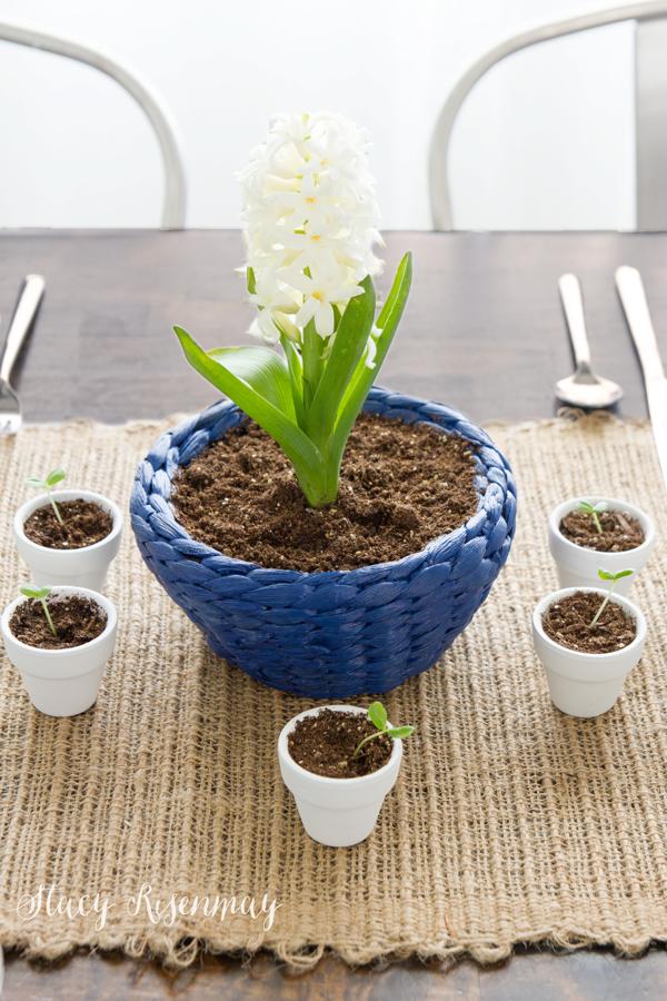 hyacinth-bowl