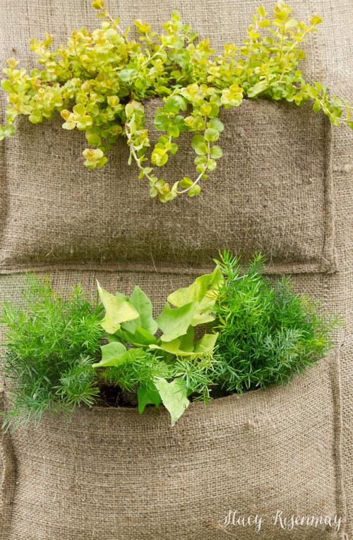 vertical-cloth-planter