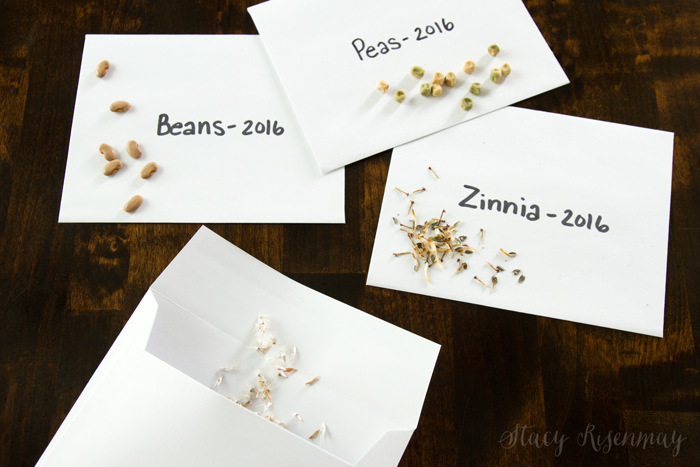 how to save seeds from the garden to use next year